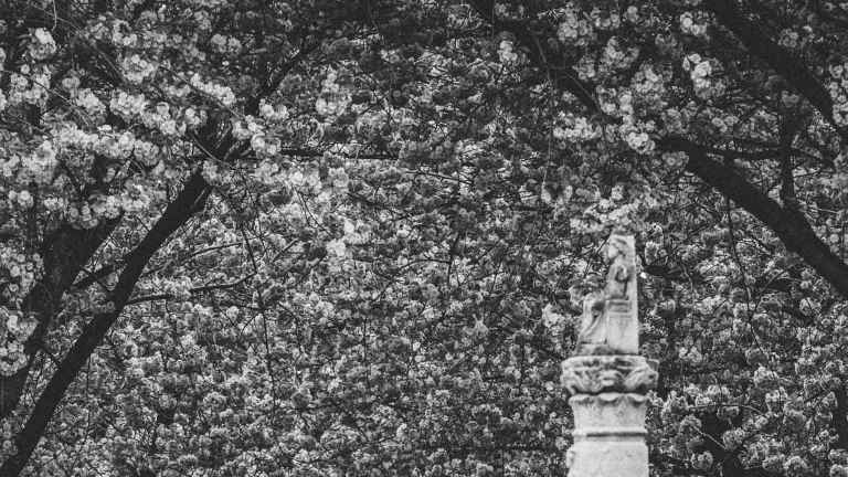 kirschblüte_groß